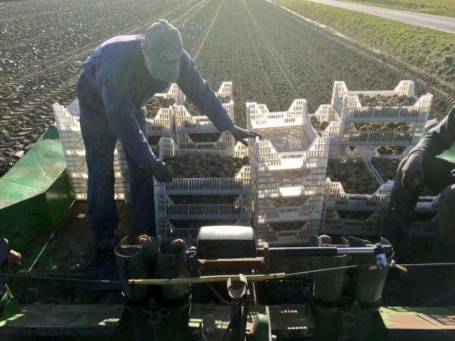 aardappels poten in Spijk, Groningen
